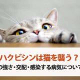 ハクビシンは猫を襲う?喧嘩の強さ・交配・感染する病気について解説