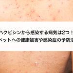 ハクビシン感染 病気