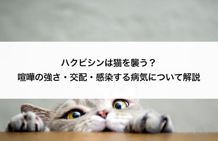 ハクビシン 猫